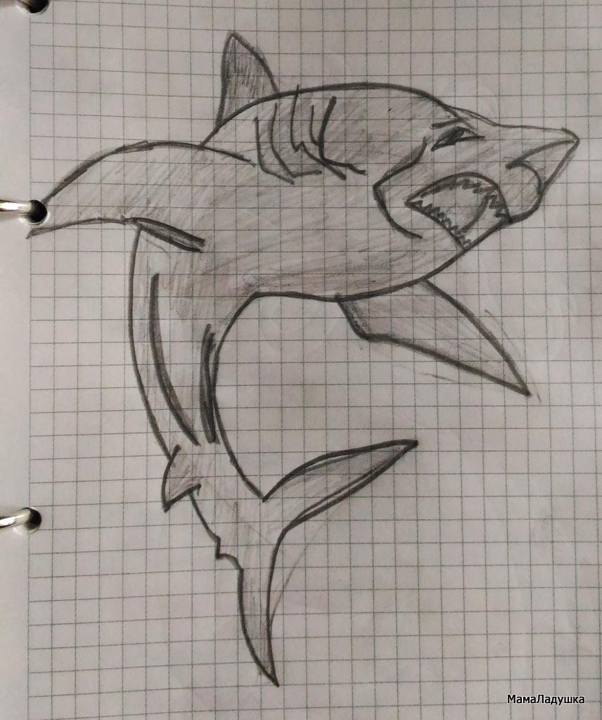акула Шарк