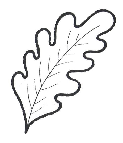 Раскраски дуба листья
