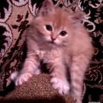 Ёжкин кот, или…200 грамм счастья