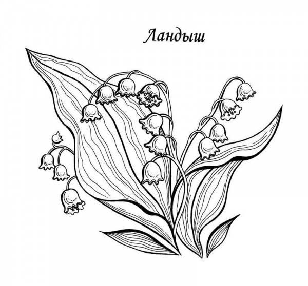 Раскраска ландыш цветок