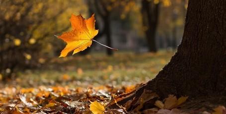 Стихи про листопад