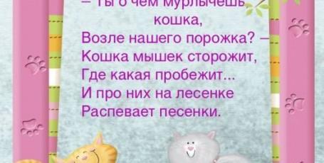 Кошачьи странички