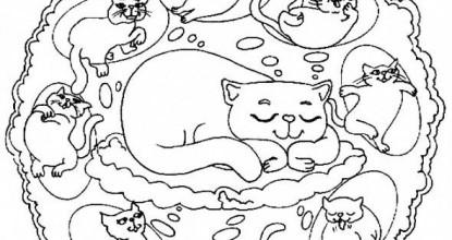 Мандалы — животный мир