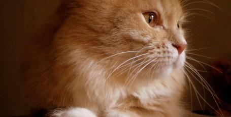 День рождения… кота
