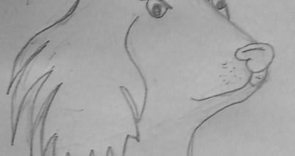 Кот и К°
