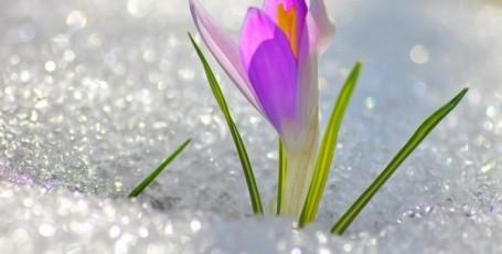 Весна — начало — стихи для детей.
