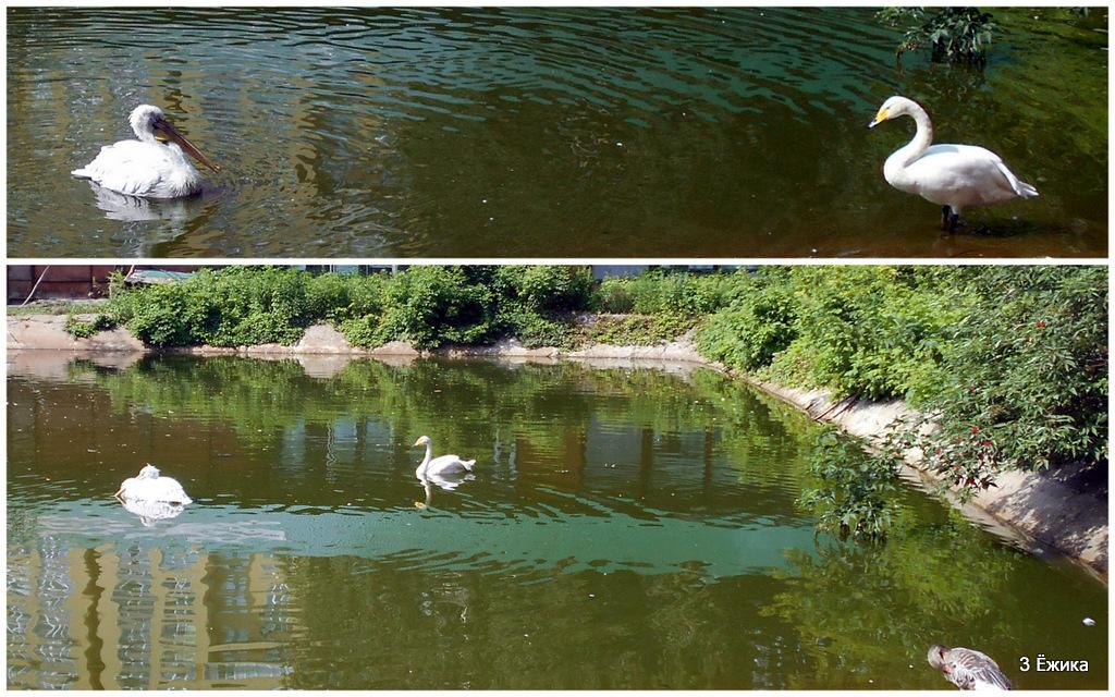 гуси - лебеди 1