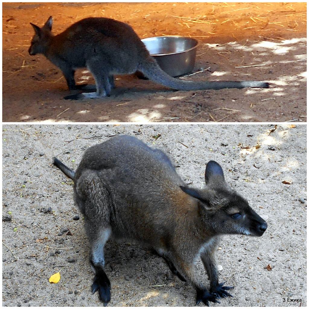 кенуру