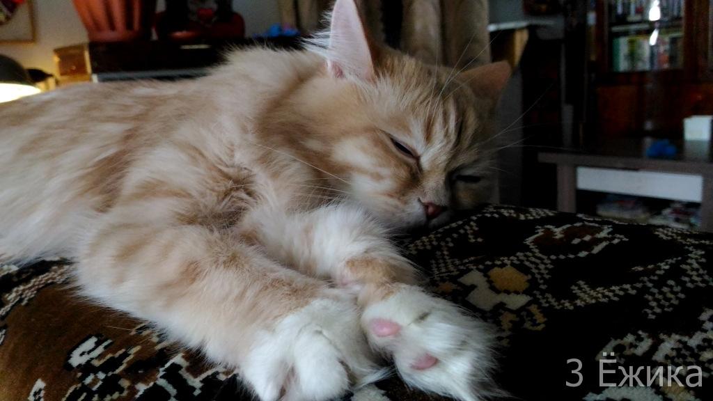 кот-сплюшка (3)