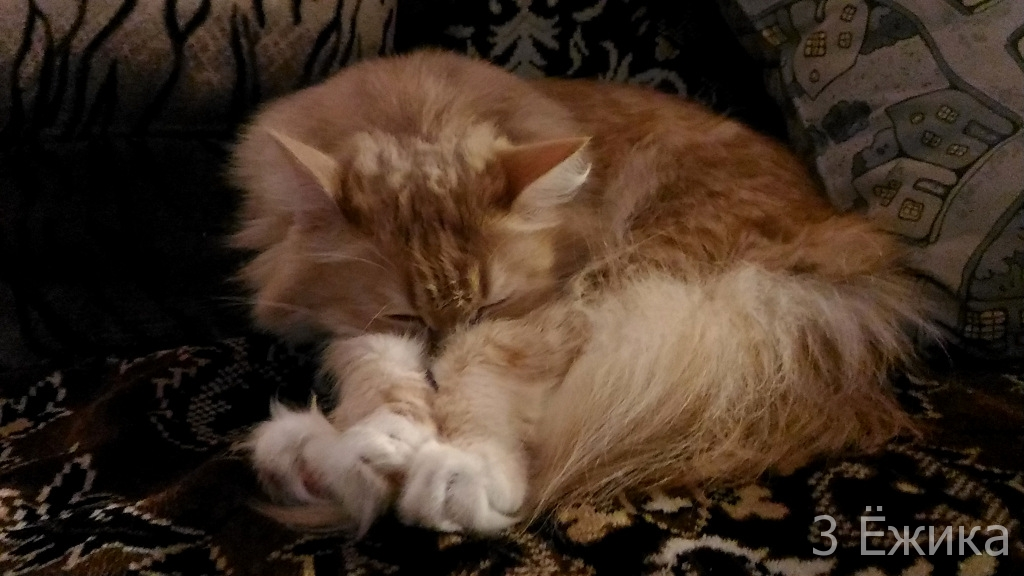 кот-сплюшка (4)