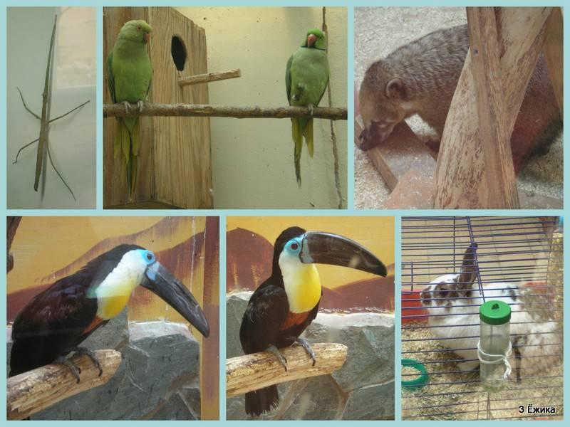 Зоопарк на станции Юннатов