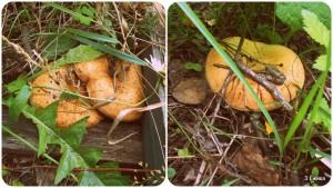 По грибы ..