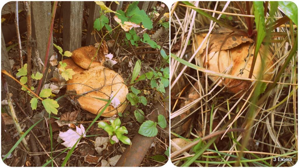 По грибы ..1