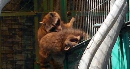 Зоопарк в детском ЭкоЦентре — часть 2.