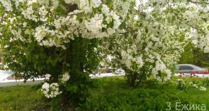 А в городе цветущий май!