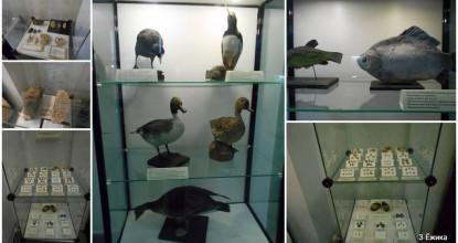 Наш любимый музей — фото-прогулка — часть 1