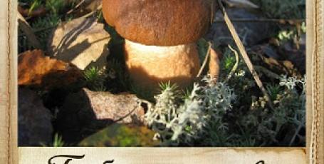 По грибы …на дачу!