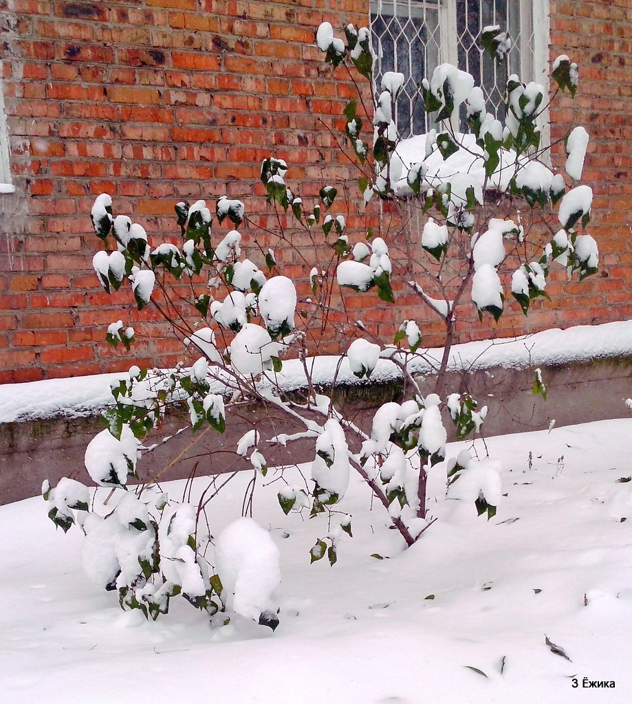 снегопад (8)