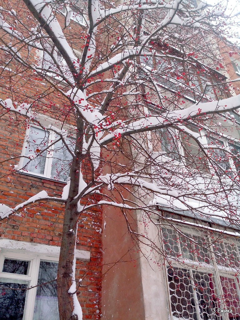 снегопад (9)