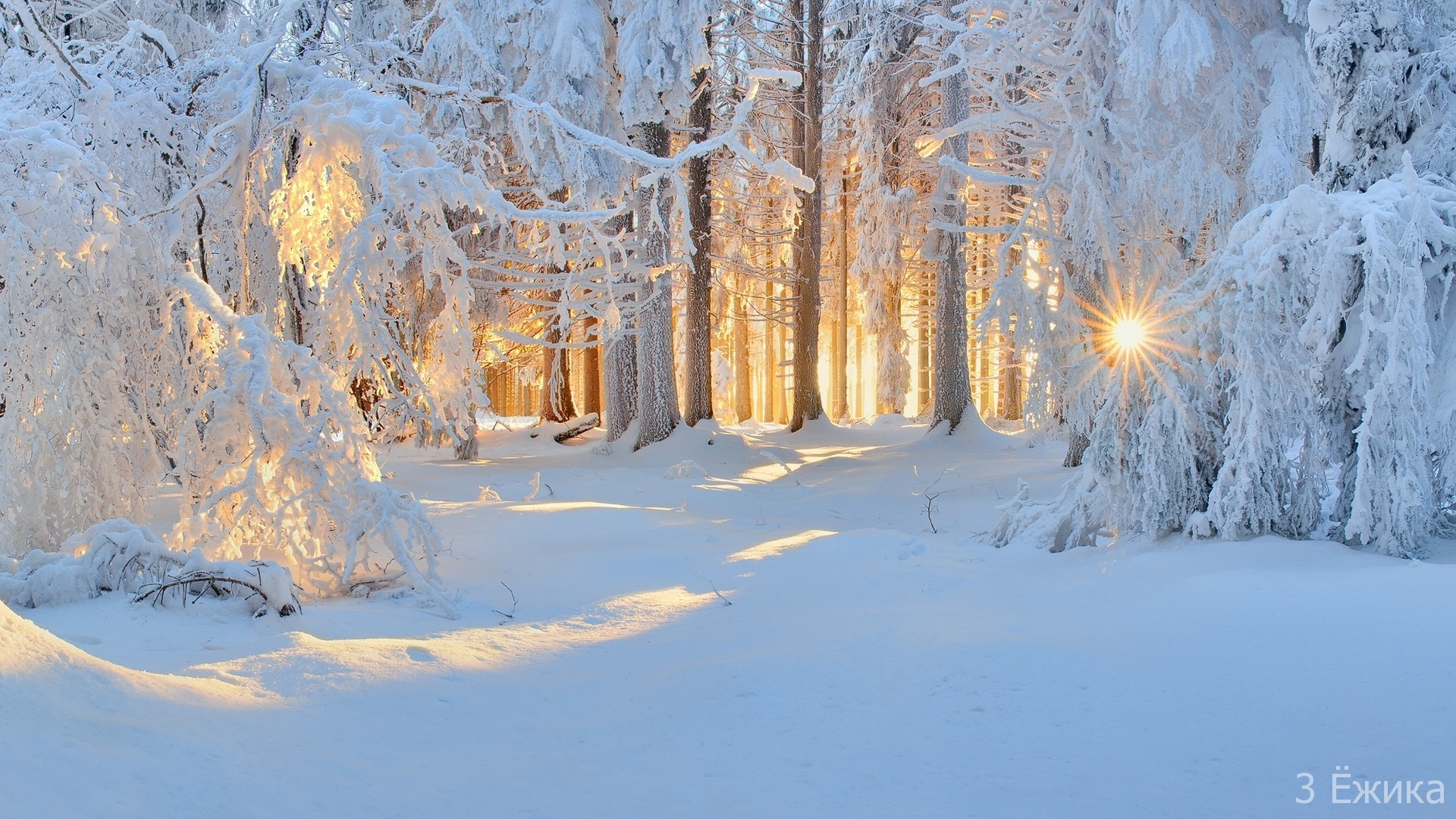sunlight-trees-landscape-forest-white-nature-snow-winter-ice-cold-frost-sun-rays-Freezing-tree-weather-season-blizzard-geological-phenomenon-winter-storm-107706