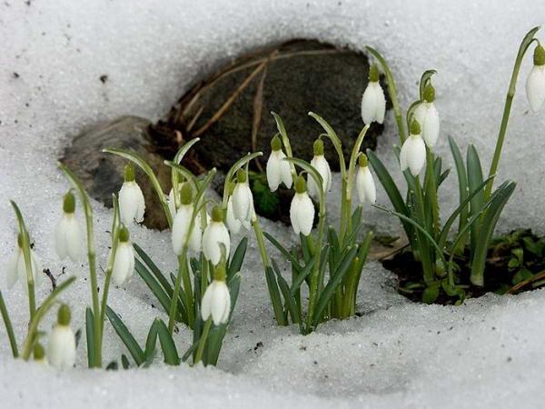 Приметы весны
